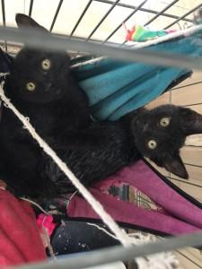 gatos para adoptar en malaga