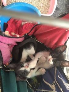 adopta gatos gratis malaga