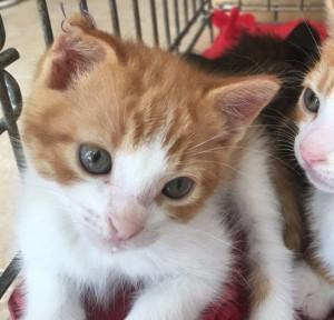 gatos-para-adoptar-en-malaga