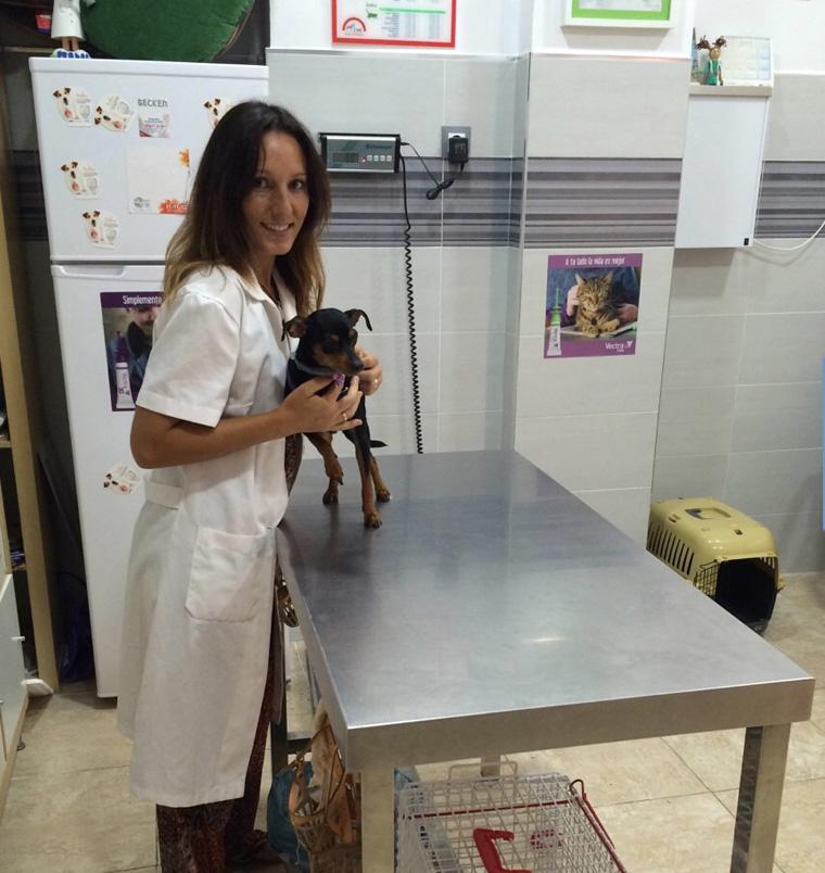 consulta veterinaria perros gatos rincon de la victoria centro veterinario animalcare