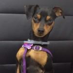 kaya mascota clinica veterinaria animalcare rincon