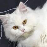 mia gata la mascota de clinca animalcare