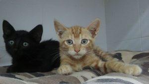 batman y robin gatitos para adoptar