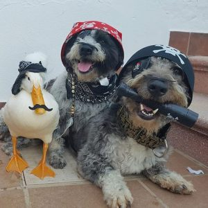 billy piru atun perros disfrazados de piratas