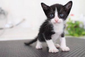 gatitos en adopcion en malaga